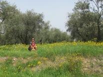 Campo de Flores Toscana